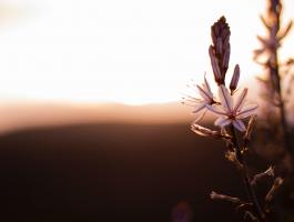 Recobrar la salut gràcies a la saviesa ancestral de la medicina Ayurveda